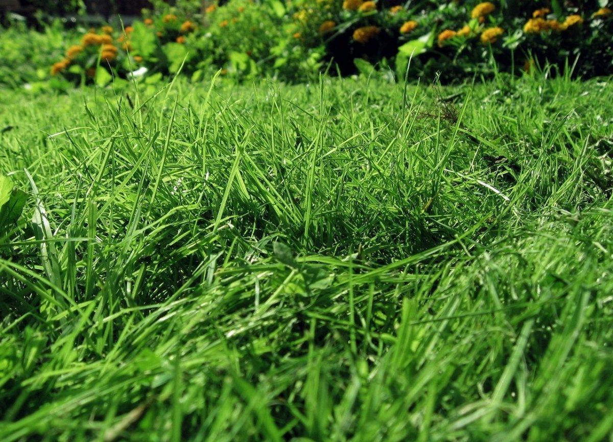 Jaki wybrać sprzęt do koszenia trawy?