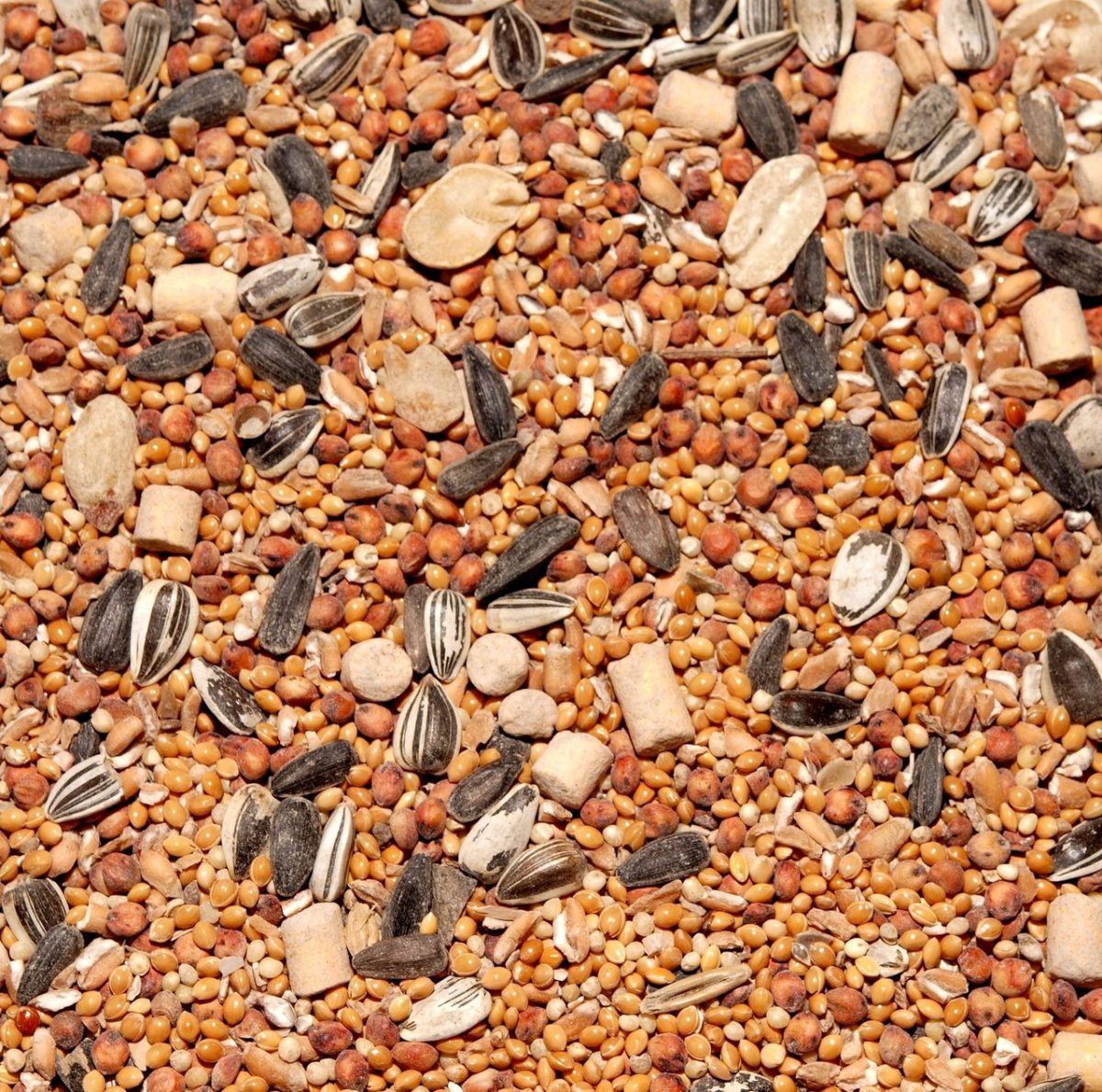 Nasiona otoczkowane – czy warto za nie zapłacić?